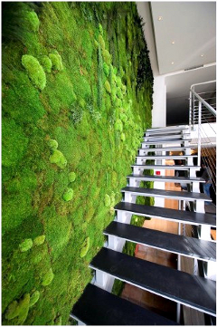 Pareti Verdi Interni.Gentilinidue Green Walls Pareti Verdi Verticali Piante
