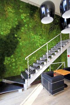 Parete verde - Green Wall